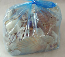 Mixed Shells - 750g for Crafts or Collecting