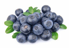 50Pcs Lots Blueberry Tree Fruit Blueberry Potted Bonsai Seeds Plant Garden BT79
