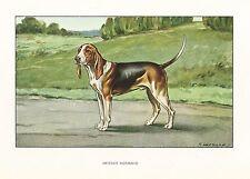 1930s Castellan France Dog Art Watercolor Print American Foxhound Type Artesien