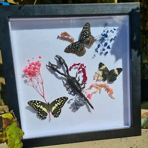 Butterflies & Scorpion taxidermy shadow box display