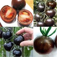 20PC Rare Tomato Black Cherry Seeds Russian Heirloom Vegetable Seed Garden Decor
