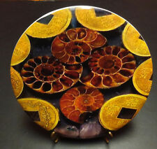 """New-Discraft-ESP Super Color Buzz.  177+.   """"Ammonites"""""""
