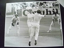 Cricket Press Photo- MIKE GATTING,ALAN BORDER in 1981 England v Aust. Test Match