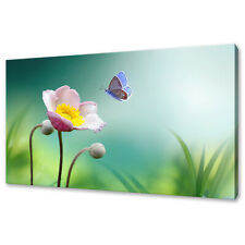 PINK YELLOW FLOWER ANEMONE BUTTERFLY MODERN CANVAS PRINT WALL ART PICTURE