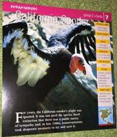 Endangered Species Animal Card - Birds - California Condor