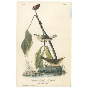 Audubon Octavo 1st Ed 1840 hand-colored litho Pl 149 Aquatic Wood - Wagtail