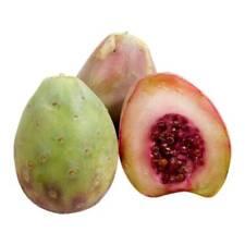 50 Seeds Opuntia xoconostle, joconostle matudae Acidic Prickly pear cactus Nopal