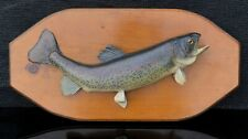 Rainbow Trout Fish (17�) Taxidermy Real Skin Mount with Wood Plaque