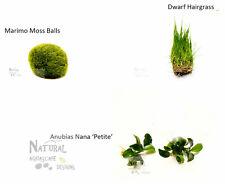 Nano Plant Package - Anubias Petite, Dwarf Hairgrass, Marimo Moss Ball
