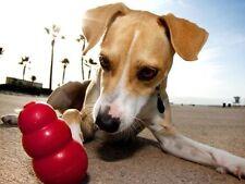 Jouets pour chiens moyens contre l'ennui en caoutchouc pour chien