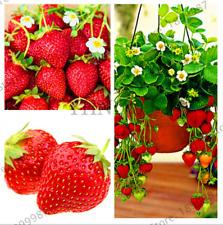 100 PEZZI semi RED GIANT Arrampicata Fragola Piante Frutta Casa Giardino Bonsai 2021