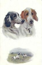 CPA illustrateur N. Drummond - Sporting Dogs, Setters (Chiens de Chasse) Oilette