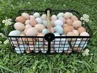 24 + Colorful Hatching Eggs : Ameraucana, Cream Legbar, Olive Egger, Maran