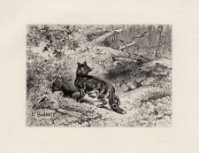 "Interesting KARL BODMER 1800s Original Etching ""The Sly Fox"" SIGNED Framed COA"