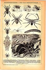 1898 Spiders Arachnids & Millipedes Tarantula Scorpion Antique Lithograph Print