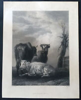 1843 William Chevalier Original Antique Print of The Young Bull by P Potter