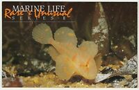 1985 STAMP PACK 'MARINE LIFE SERIES II' - GREAT CONDITION WITH MNH STAMPS