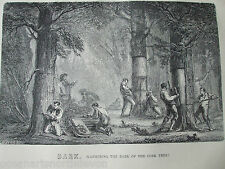 ANTIQUE PRINT DATED C1880S ENGRAVING BARK GATHERING THE BARK OF THE CORK TREE
