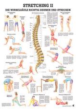 Rüdiger Anatomie Stretching 2 Poster 24cm x 34cm NEU & OVP
