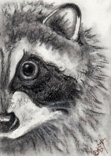 mask Raccoon aceo EBSQ Kim Loberg wildlife Mini Art wild Animal Charcoal drawing
