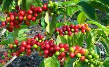 10 lbs ORGANIC Colombian Huila FTO Unroasted Green Coffee Beans WASHED