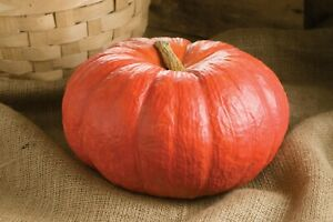 Seeds Pumpkin Kavbuz Red Giant Ornamental Vegetable Planting Organic Ukraine