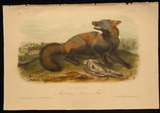 1851 Original Audubon 1st Ed Octavo Quadropeds of American Gross Red Fox Plate 6
