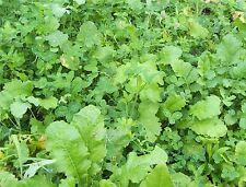4 lbs PREMIUM DEER FOOD PLOT MIX Seeds, NO TILL Clovers, Chicory, Rape, Turnip