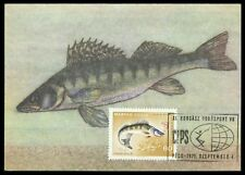 UNGARN MK 1971 FAUNA FISCHE ZANDER FISH MAXIMUMKARTE MAXIMUM CARD MC CM cz19