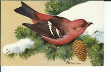 AX-250 White Winged Crossbill Artist Signed Peterson, Chrome Postcard 1957