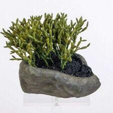 Deko-Blumen & künstliche Pflanzen aus Kunststoff mit Kaktus Formano