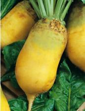 Fodder Beet Eckendorf Yellow seeds beetroot for feeding animals Ukraine 5 g