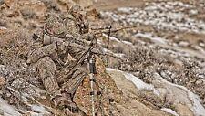 SHOTGUN Mossy Oak Camo Skin COVER KIT BRUSH  HUNTING SNIPER