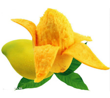 5pcs Mango Seeds Mini Mango Tree Organic Heirloom Fruit Plant For Home Garden