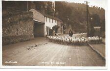 Llangollen sheep going to Market  Denbighshire RP