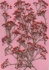PRESSED FLOWERS 12 SM SPRAYS OF PRETTY PINKY -RED GYP IDEAL 4 CARD MAKING, CRAFT