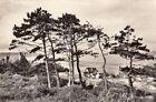 BLONVILLE-SUR-MER la plage à travers les sapins timbrée 1960