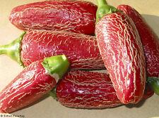 JALAPENO AGRIETADA pure seeds
