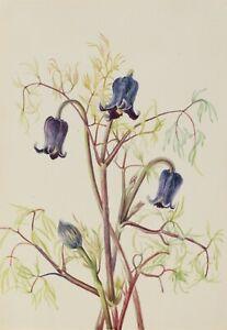 "Mary Vaux Walcott : ""Leather Flower"" (c.1930s) — Giclee Fine Art Print"