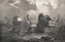 Un ataque de noche 1872 Joseph Wolf-Lion Victoriano Grabado