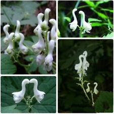 200 Pcs Rare White Swan Seeds Bonsai Plant Tree House Herb Garden Flower Decor