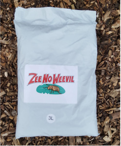 ADULT Vine Weevil ZEE NO WEEVIL granules STOP Adults laying eggs Pet safe