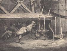 ROOSTER CHICKEN HEN SHOWERING UNDER LEAKY WATER BARREL ANTIQUE ART PRINT 1878