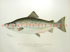 BLACK BAY ATLANTIC SALMON ~ 1897 Sherman DENTON Game FISH Fisherman Art Print