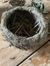 Unusual Genuine Real Abandoned Natural Found Birds Bird Nest Mud Grass Moss