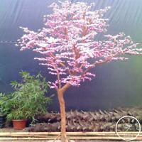 10 PCS Seeds Red Japanese Cherry Plant Courtyard Garden Bonsai Tree Small Sakura