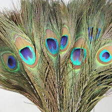 10Pcs Green Long Natural Real Peacock Tail Feather DIY Bouquet Home Decor Random