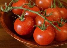 25+ Sweet Organically Grown Campari Tomato Seeds-O 077