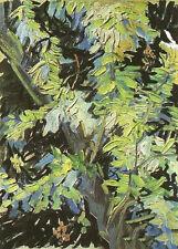 Oil painting Vincent Van Gogh - Branches d'acacia fleuries canvas