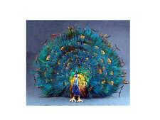 Peacock -  1/12 scale dollhouse miniature